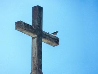BirdOnACross